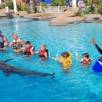 Delfine schwimmen