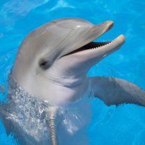 Delphine Schwimmen Antalya