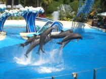 Delphin Show Alanya